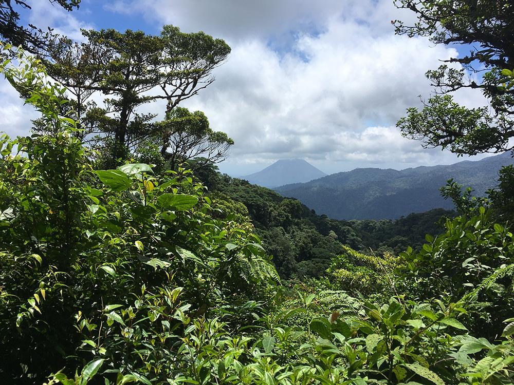 Costa Rica Faune Flore Monte Verde
